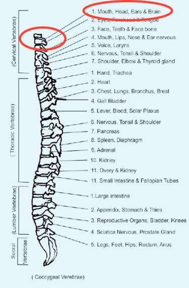 spine-2